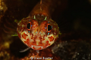 I think its a male 3 fin by Dave Baxter
