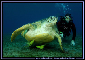 Big Turtle not far from Marsa Shagra... With my very good... by Michel Lonfat