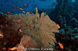The reef and its inhabitants by Vittorio Durante