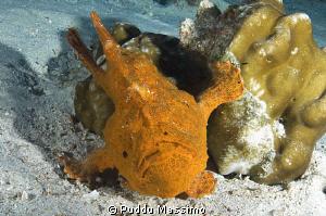 orange frog nikon d2x 17-35mm by Puddu Massimo
