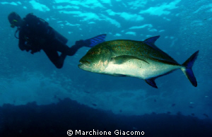 Man and fish, friends? Nikon D200, 17-35nikkor. Twin str... by Marchione Giacomo