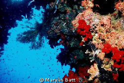 Wide angle of beautiful bomme with all that makes Fiji on... by Marylin Batt