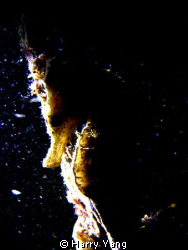 2010/4/03 Night Dive in Kenting,TAIWAN..
