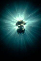 """The biggest Black Sea jelly """"Rhizostoma pulmo"""" and sunbea... by Lyubomir Klissurov"""