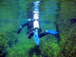 Photo of Dive Buddy going through Ewans Ponds in South Au... by Daryl Gabriel