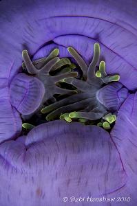"""""""Hands"""" by Debi Henshaw"""