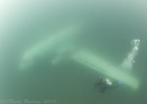 Mr T on plane wreck. by Derek Haslam