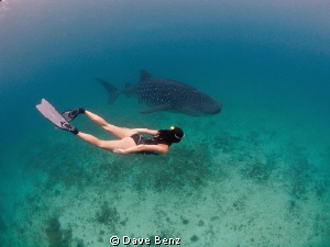 Amazing snorkel dive together with a whaleshark and a uw-... by Dave Benz