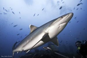 Diving with Aquatrek in Beqa Passage Fiji, Madonna the si... by Sam Cahir