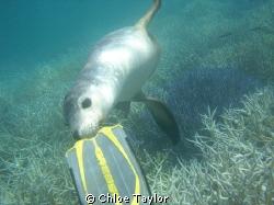 Abrolhos Islands by Chloe Taylor