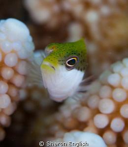 fish pushups by Sharon English