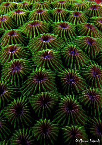 Coral Abstract........  (Compact camera Nikon Coolpix 84... by Marco Faimali