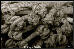 Black and White image of soft coral closed, Similan Islands. by Kaye Smith
