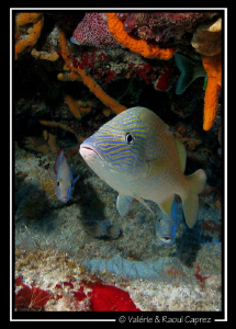 Picture taken in Cozumel with a Canon G9 and a single DS1... by Raoul Caprez