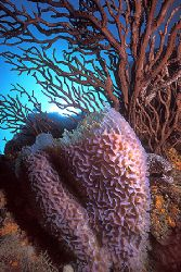 Secret Moray / Los Roques, Venezuela by Federico Cabello