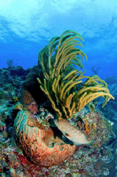 The Grouper was just passing through this shot of a coral... by Paul Colley