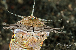 Bobbit Worm by Julian Cohen