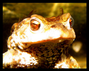 Frog Life III. by Veronika Matějková
