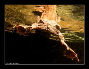 Frog Life IV. by Veronika Matějková