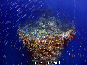 Bow of Fujikawa Maru.