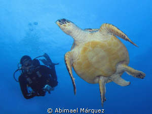 Eduardo and the turtle by Abimael Márquez
