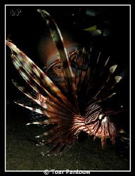 3 eyes... shore dive heading to Mandarin Fish Spot in th... by Toar Pantouw