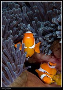 Nemo by Dray Van Beeck