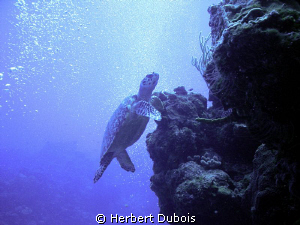 Taken on Tormentos Reef Cozumel by Herbert Dubois