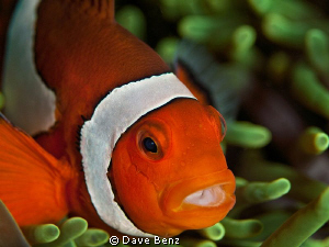 Hey Nemo...how are you ??? by Dave Benz