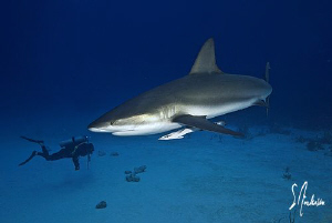 This image was taken during Shark dive in Nassau. What a ... by Steven Anderson