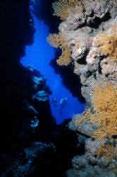 Out of the cave. Sharm El Sheikh area reefs, Red Sea . Ni... by Lyubomir Klissurov