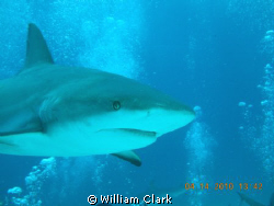 Is it dinner yet?