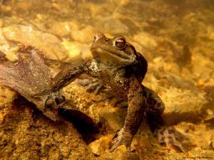Frog Life V. by Veronika Matějková