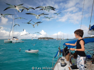 Gabriel and the seagulls. (Tobago Cays). Nikon D40, fill... by Kay Wilson