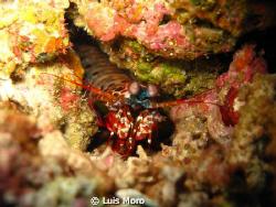mantis posing by Luis Moro