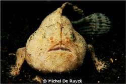 I think this should be a Cryptic Frogfish. Shot was taken... by Michel De Ruyck