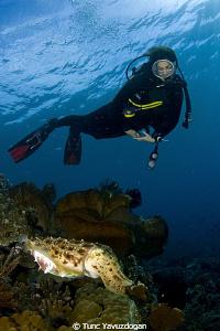 Cuttlefish :) by Tunc Yavuzdogan