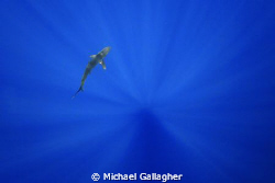 Silky shark in sunbeams, Tokina 10-17mm FE by Michael Gallagher