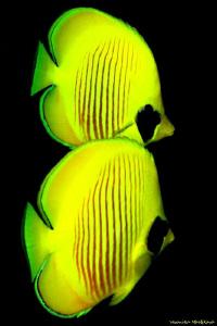 Yellow by Veronika Matějková