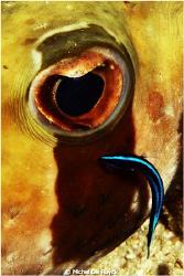 Eye doctor. by Michel De Ruyck