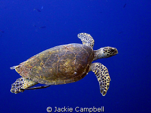 We were nearing the end of a pretty uneventful dive when ... by Jackie Campbell