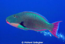Parrotfish poo. It's always funny... by Michael Gallagher
