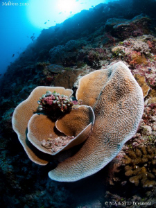 Beautiful hard coral. Canon G10. by Bea & Stef Primatesta