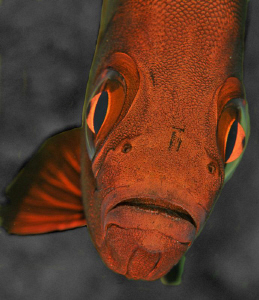 Soldier Fish by Charles Wright
