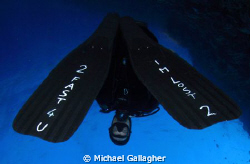 Would you follow this dive guide??? by Michael Gallagher
