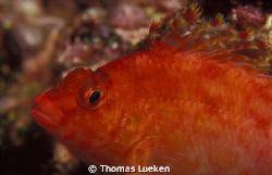 found in Galapagos; F100 by Thomas Lueken