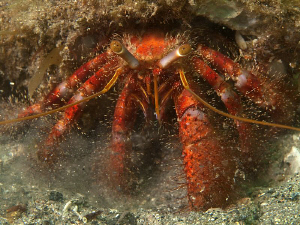 Hermit Crab, Shiprock by Doug Anderson