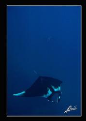 2 giant mantas swimming in Koh Bon by Adriano Trapani