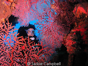 Near the bow gun on the Fujikawa Maru, I found this beaut... by Jackie Campbell