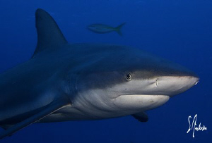 Lots of sharks some quite big were found during our dive ... by Steven Anderson